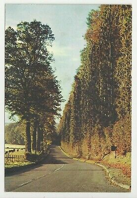 £1.25 • Buy Postcard, The Beech Hedge, Meikleour, Perthshire - Posted 1966