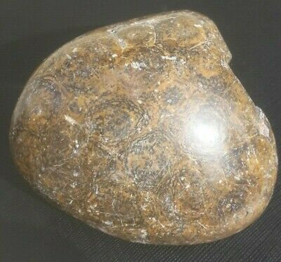 Hexagonia Fossil Coral From Morocco • 10£