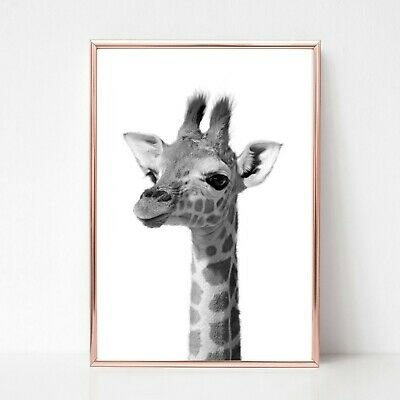 Baby Giraffe Print Picture UNFRAMED Print Nursery Wall Art A4 Black White Animal • 3.85£