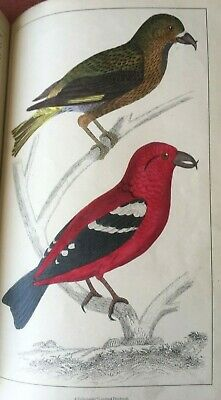 Oliver Goldsmith A History Of The Earth & Animated Nature Illustrated. Fullarton • 95£