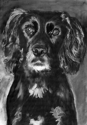 £15 • Buy Working Cocker Spaniel Art, Dog Gift Artist Signed From Charcoal Drawing