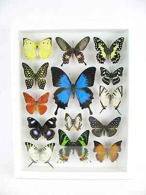 14 Beautiful Butterflies In 3D Box - Real - Taxidermy - One-of-a-kind - Nice 05 • 169.95£
