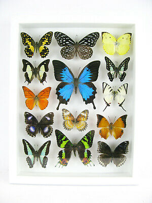 14 Beautiful Butterflies In 3D Box - Real - Taxidermy - One-of-a-kind - Nice 06 • 169.95£