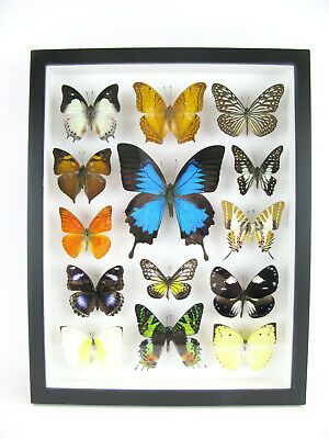 14 Beautiful Butterflies In 3D Box - Real - Taxidermy - One-of-a-kind - Nice 08 • 169.95£