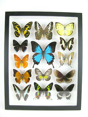 14 Beautiful Butterflies In 3D Box - Real - Taxidermy - One-of-a-kind - Nice 09 • 169.95£