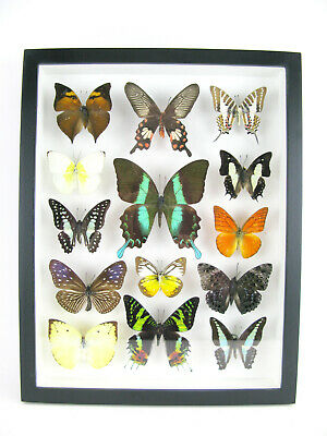 14 Beautiful Butterflies In 3D Box - Real - Taxidermy - One-of-a-kind - Nice 13 • 169.95£