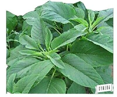 £2.50 • Buy Salad - Amaranth - Green Giant (spinach SEEDS -  6grams