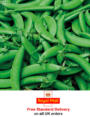 £3.45 • Buy 100 X PEA 'SUGAR SNAP NAIROBI' SEEDS - SOW MARCH To JUNE -HEAVY YIELDS