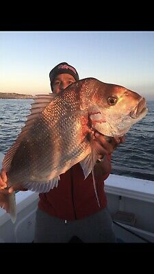 AU20 • Buy 10 Snapper Rigs Flasher Rig Bottom Reef Fishing Paternoster Hook 7/0 ,60lb Line.