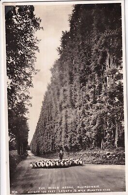 £2.99 • Buy Vintage Postcard - The Beech Hedge, Blairgowrie - Unposted 0522