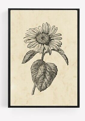 £2.84 • Buy Vintage Sunflower Print Picture Wall Art Unframed Vintage Home Decor 2 A4