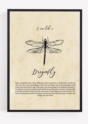 £2.84 • Buy Vintage Dragonfly Print Picture Entomology Insect Wall Art Unframed Home A4