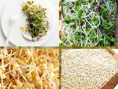 £2.79 • Buy ✅Buy 2 GET 2 Free ✅GOURMET MIX3 ORGANIC SEEDS SPROUTING SHOOTS MICROGREENS 12.5G