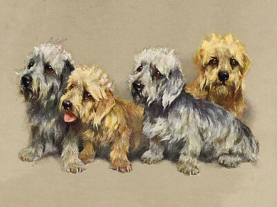 £2.25 • Buy Dandie Dinmont Terrier Lovely Group Of Dogs Charming Dog Greetings Note Card