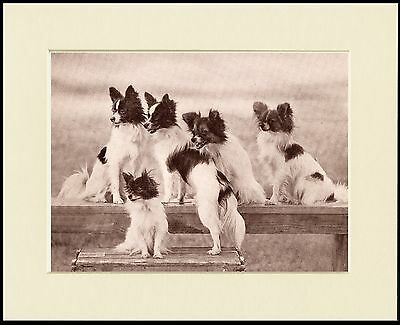 £7.99 • Buy Papillon Lovely Little Dog Print Group Of Five Dogs Mounted Ready To Frame