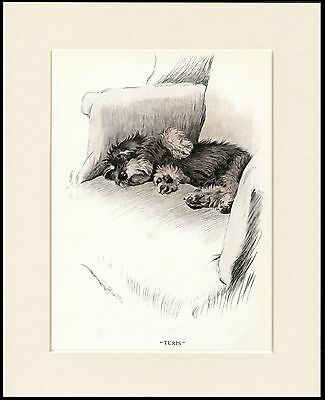 £7.99 • Buy Dandie Dinmont Terrier Sleeping Puppy Charming Dog Print Mounted Ready To Frame