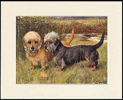 £7.99 • Buy Dandie Dinmont Terrier Two Dogs Lovely Dog Art Print Mounted Ready To Frame