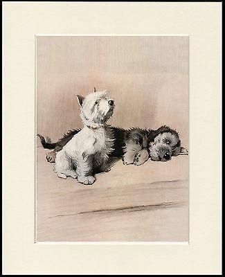 £7.99 • Buy Westie And Dandie Dinmont Terrier Dogs Charming Dog Print Mounted Ready To Frame