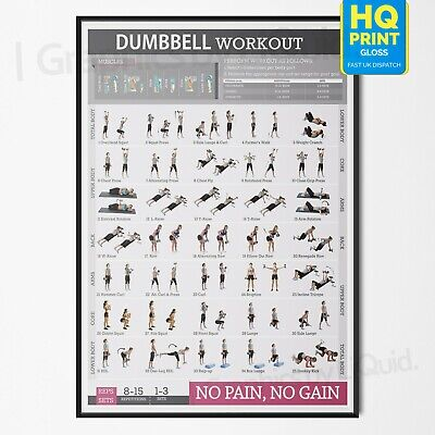 Dumbbell Workout Chart Exercise Poster Perfect To Build Muscle | A4 A3 A2 A1 | • 2.99£