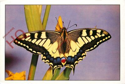 Picture Postcard- Butterfly, Swallowtail • 2.29£