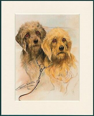 £7.99 • Buy Dandie Dinmont Terrier Lovely Dog Print Mounted Ready To Frame