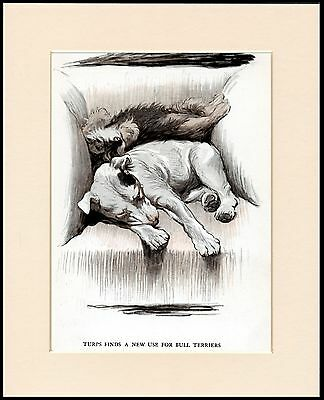English Bull & Dandie Dinmont Terrier Charming Dog Print Mounted Ready To Frame • 7.99£