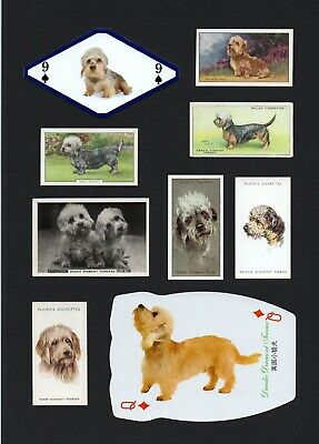 Dandie Dinmont Terrier Mounted Collection Of Vintage Dog Cards Great Gift • 9.99£