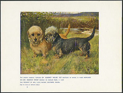 £12.99 • Buy Dandie Dinmont Terrier Named Dogs Antique Dog Art Print From 1907 By Wardle