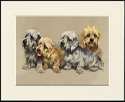 Dandie Dinmont Terrier Group Of Dogs Lovely Dog Print Mounted Ready To Frame • 7.99£