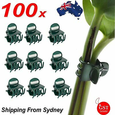 AU12.99 • Buy 100xSmall Orchid Plant Clips In Dark Green Plastic Stake Phalaenopsis Dendrobium