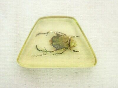 $14 • Buy Vintage Beetle Resin Paperweight Green Scarab Insect Educational Specimen 3.75 W