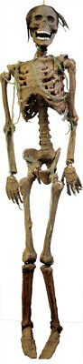 $69.99 • Buy Halloween Life Size Rotted Decayed Corpse Skeleton Prop Haunted House Decoration
