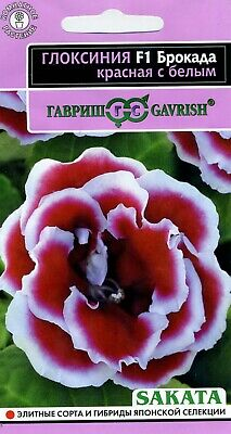 £1.41 • Buy Gloxinia  Brocada F1 Red With A White Edge   Japanese High Quality