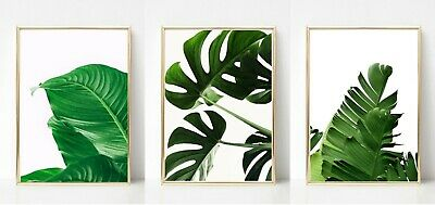 Palm Leaf Leaves Print Picture Wall Art A3  Botanical Plant Unframed Home Decor • 8.99£
