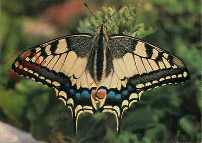 Picture Postcard- Swallowtail Butterfly [Salmon] • 3.49£