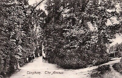 Circa 1908 Postcard: Donkeys On The Avenue, Tongham, Farnham, Surrey • 1.50£
