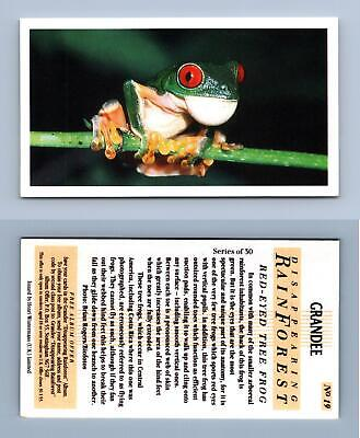 £0.99 • Buy Red-Eyed Tree Frog #19 - Disappearing Rain Forest 1991 Grandee Cigarette Card