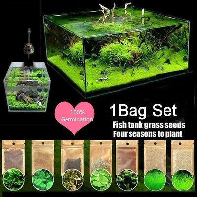 AU2.39 • Buy Aquarium / Fish Tank / Aquascaping Carpeted Plants Seeds 5g/pack
