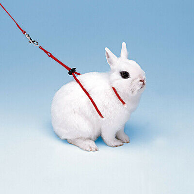 £2.50 • Buy SMALL ANIMAL ROPE HARNESS AND LEADS  By FERPLAST