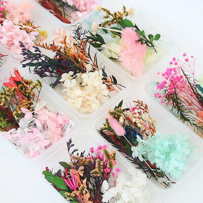 AU9.49 • Buy Real Dried Flowers Pressed Leaves For Epoxy Resin Jewelry Making DIY Art Crafts