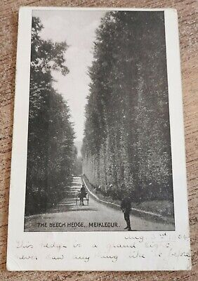 £2.50 • Buy The Beech Hedge, Meikleour Antique Postcard Used 1904