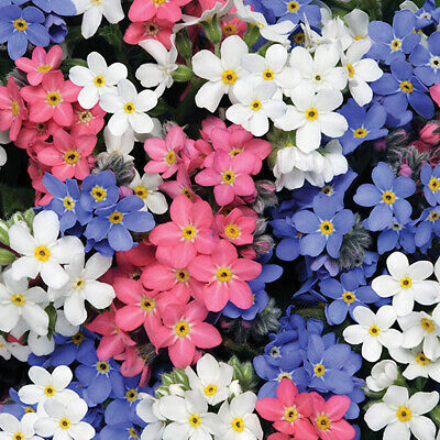 £2.79 • Buy 100 UK Pastel Mini Forget Me Not Seeds To Plant & Grow Pink Blue & White Flowers