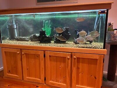 AU1200 • Buy Fish Tank 6ft X 2ft X 2ft With Cabinet And Hood And All Accessories