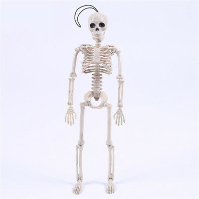$ CDN7.95 • Buy Posable Skeleton Halloween Decor Scary Man Bone Creepy Party Decoration YJRU
