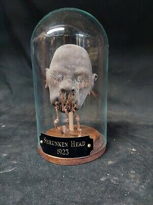 £213.68 • Buy Rare Shrunken Head Collectible ,mummified,obscure,wunderkammer,sideshow Gaff,odd