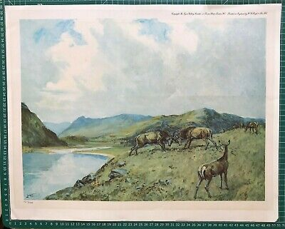 £17.99 • Buy Limited Edition Print; Loch Scene With Deer By Lionel Edwards