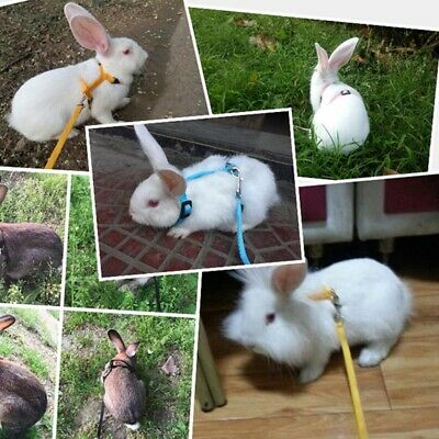 £4.77 • Buy Small Pet Rabbit Ferret Bunny Soft Harness Lead Leash Adjustable Traction Rope