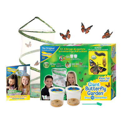 £34.99 • Buy Insect Lore - GIANT Live Butterfly Garden Hatching Kit - FREE SHIPPING Across UK