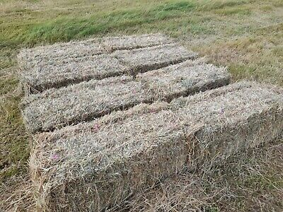 £3.50 • Buy Hay For Sale, Conventional Bales £3.50 Per Bale Off Field