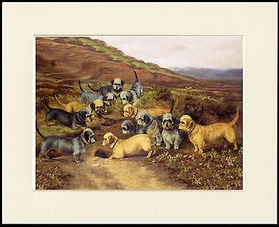 £7.99 • Buy Dandie Dinmont Terrier Lovely Little Dog Group Print Mounted Ready To Frame